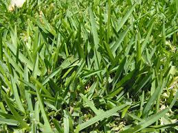 What Kinds of Grass to Plant in Florida